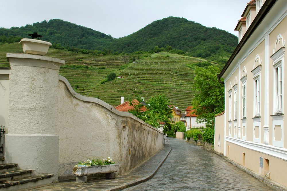 Cycling from Passau to Vienna - Wine and Winemakers between Passau and Vienna - Spitz