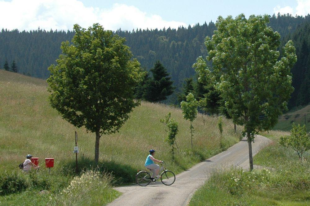 Radurlaub Bodensee - Radtour Passau Wien