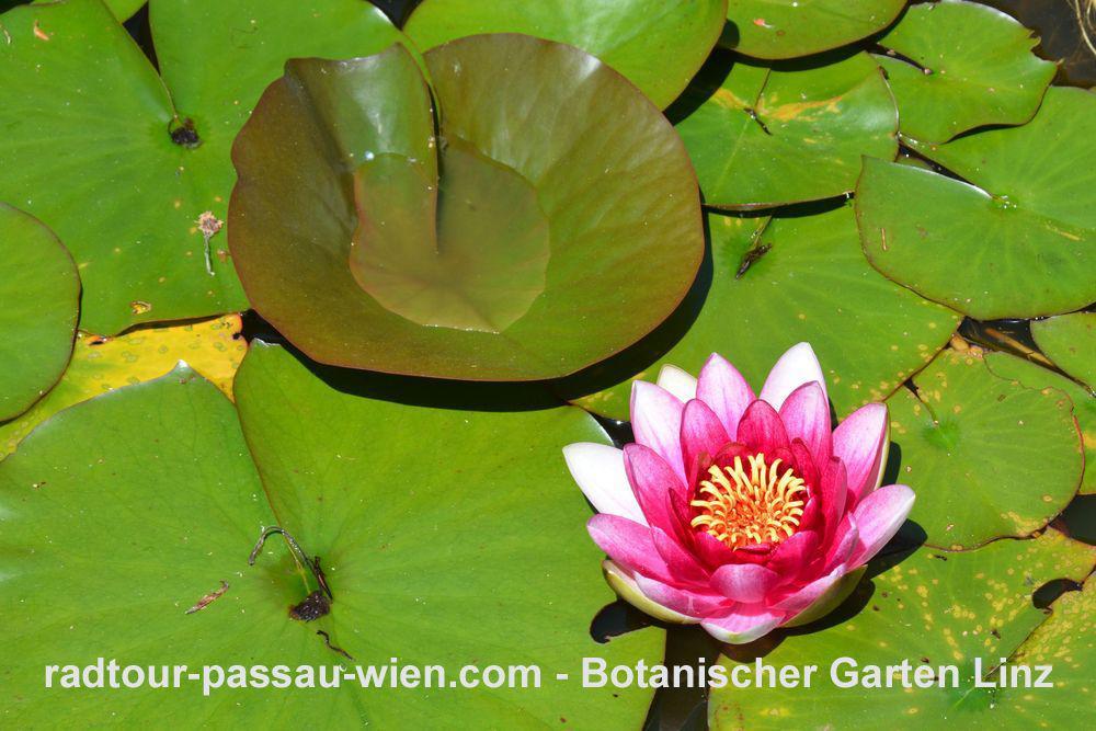 Botanischer Garten in Linz